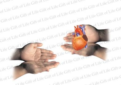 "Organ Donation after death  –  ""The Gift  of Life"""