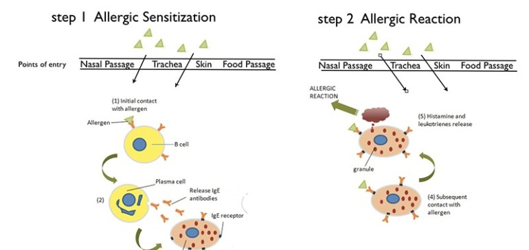 Causes, Symptoms and Treatments of Allergy
